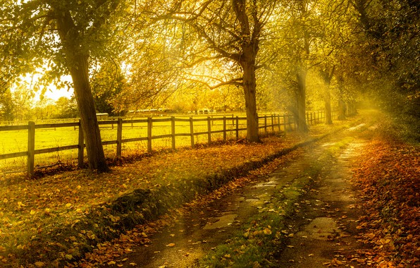 Picture road, autumn, leaves, the sun, trees, the fence, yellow