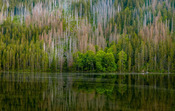 Picture forest, reflection, trees, nature, river