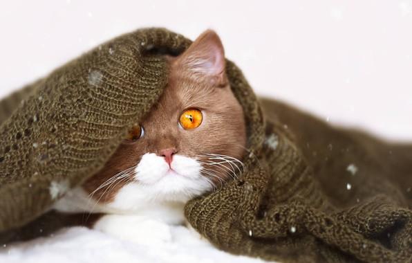 Picture cat, cat, look, portrait, muzzle