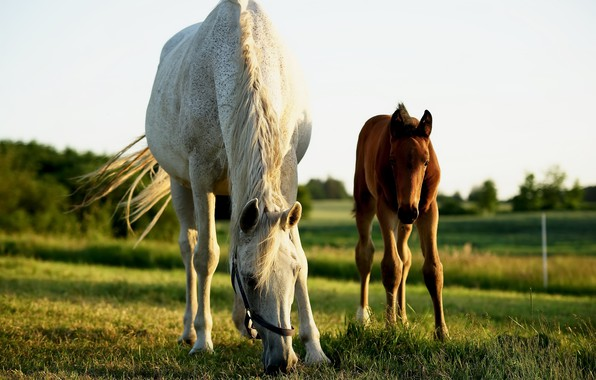 Picture summer, nature, horses