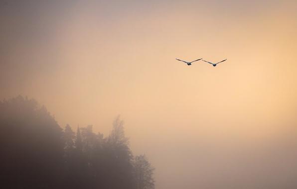 Picture birds, fog, flight