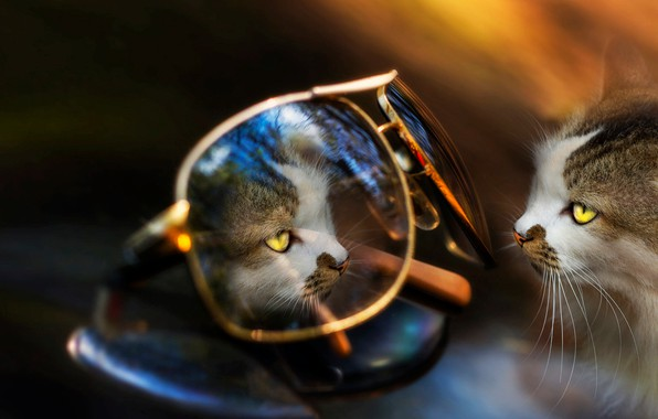 Picture cat, animal, reflection, glasses, Eleonora Di Primo, cat