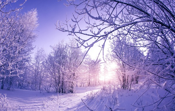Picture winter, the sun, snow, trees, nature