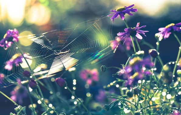Picture macro, flowers, nature, web, spider