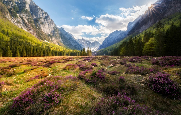 Picture forest, summer, the sky, clouds, light, flowers, mountains, valley