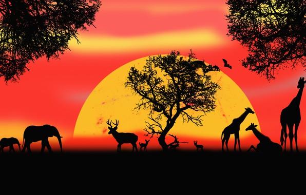 Picture animals, picture, Safari