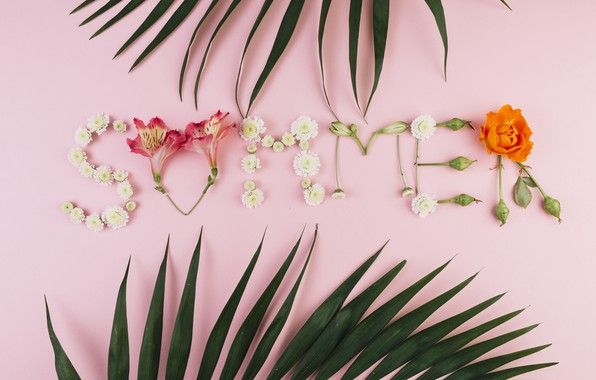 Picture summer, leaves, flowers, background, pink, summer, pink, flowers, composition