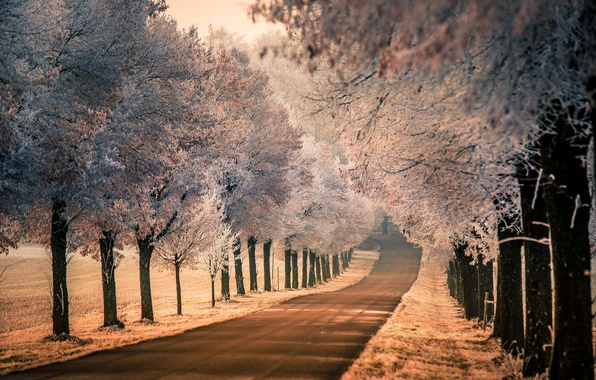 Picture frost, road, nature, fog, morning