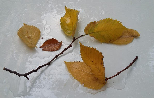 Picture autumn, rain, minimalism, twigs, fallen leaves, drops on the hood