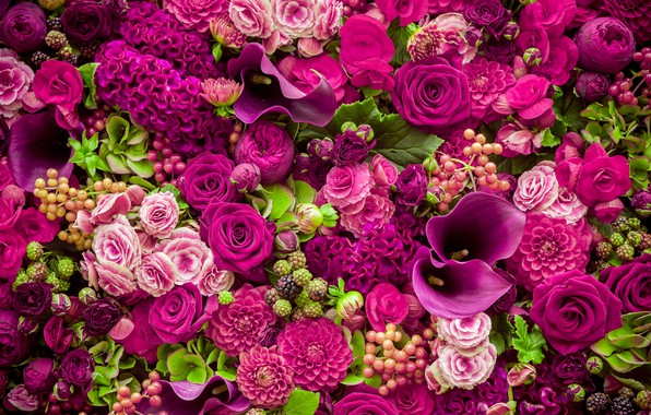 Picture flowers, roses, pink, buds, pink, flowers, beautiful, romantic, purple, roses