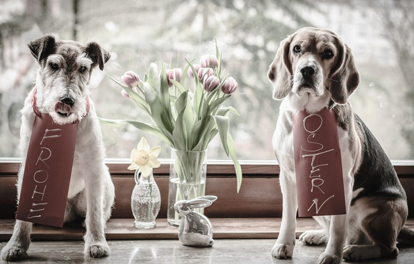 Picture animals, dogs, flowers, hare, window, Easter, pair, tulips, vase, figure, Narcissus, Beagle, the Foxhound