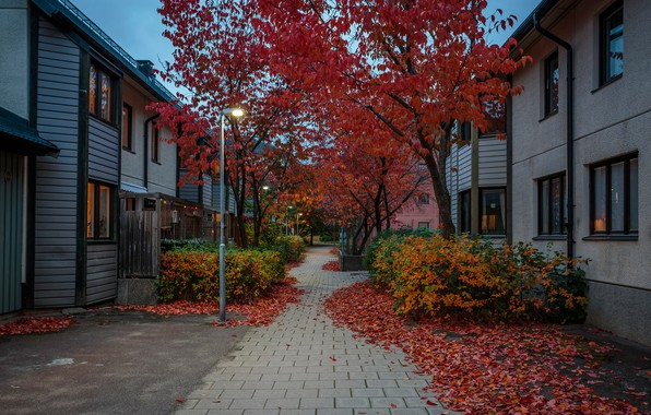 Picture autumn, leaves, trees, lights, street, home, the evening, lights, Stockholm, Sweden, the sidewalk, the bushes