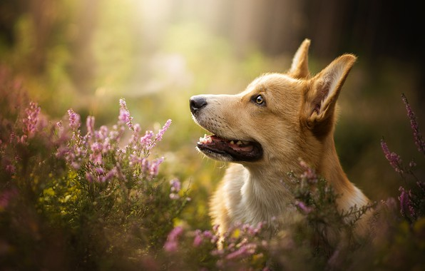 Picture flowers, bokeh, PROFILE, DOG, Capper