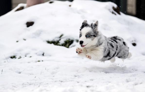Picture dog, running, puppy, flight