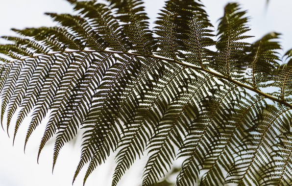 Picture leaves, green, fern