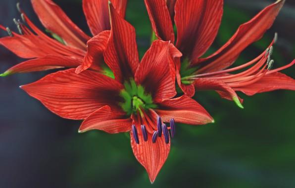 Picture flower, macro, petals
