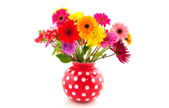 Picture flowers, white background, vase, red, gerbera, colorful, polka dot, dahlias