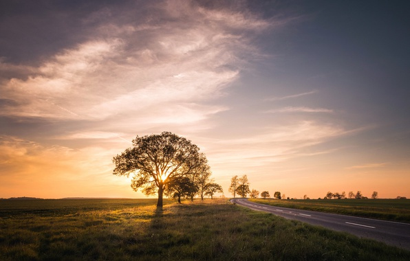 Picture road, field, sunset, tree