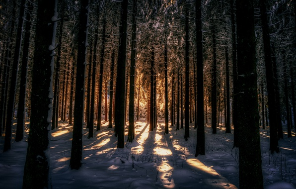 Picture winter, forest, light, snow, night