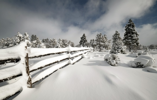 Picture winter, snow, the fence