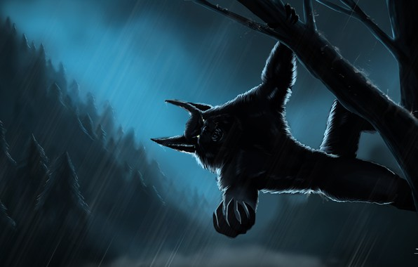 Picture forest, night, rain, forest, Werewolf, rain, night, werevolf