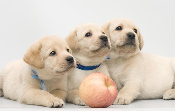 Очаровательные помеси собак 21 фото