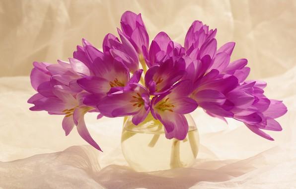 Picture autumn, joy, flowers, nature, beauty, plants, crocuses, a bunch, the color purple, September, many, composition, …