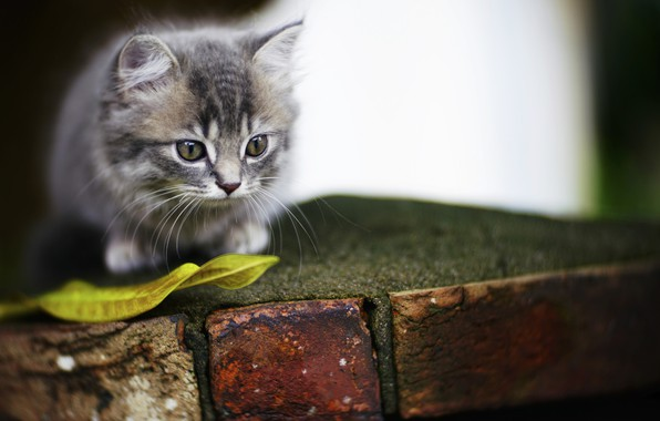 Picture kitty, background, eyes, cute