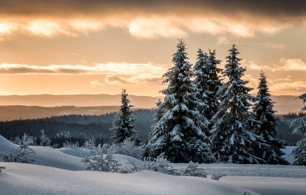 Picture winter, forest, snow, ate, Norway, Lillehammer, Lillehammer