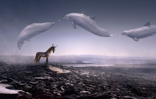 Picture animals, the sky, landscape, mountains, space, fog, stones, rendering, fiction, horse, horse, fantasy, art, dolphins, …