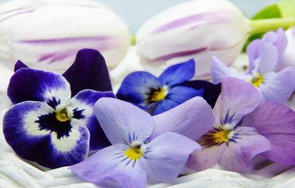 Picture macro, Flowers, Pansy