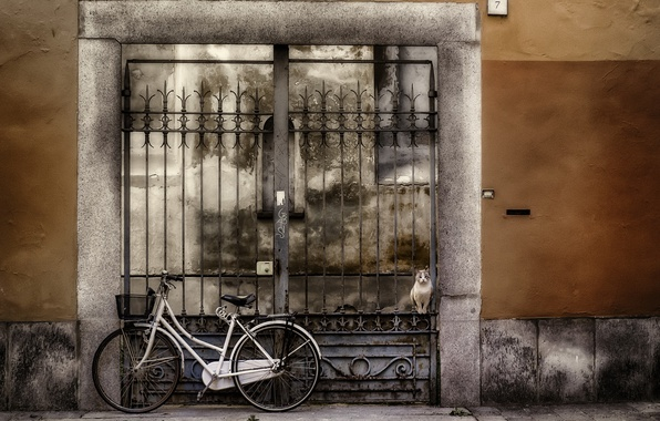Picture cat, bike, the city, house