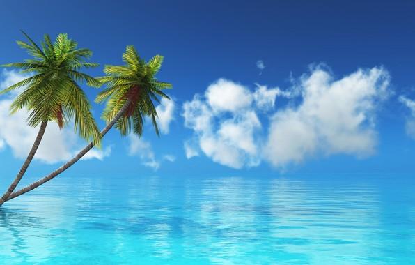 Picture sea, tropics, Palma