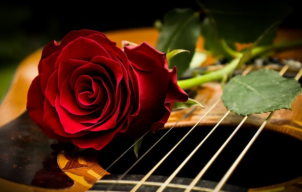 Picture background, rose, guitar