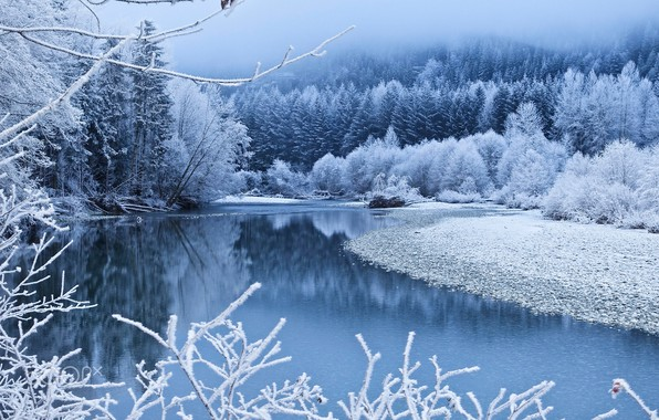 Picture winter, forest, snow, trees, branches, fog, river, blue, shore