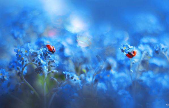 Picture macro, ladybugs, floral, nasekomye, Anastasia Ri
