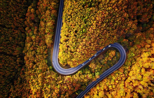 Picture road, machine, autumn, forest, nature, the view from the top, dervla