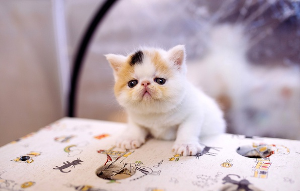 Picture cat, white, cat, kitty, table, background, small, muzzle, cute, kitty, tablecloth, spotted, extreme, climbed, ball, …