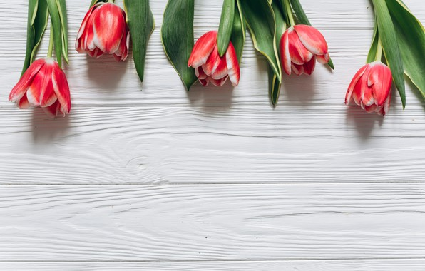 Picture flowers, tulips, red, red, fresh, wood, flowers, beautiful, tulips, spring, tender