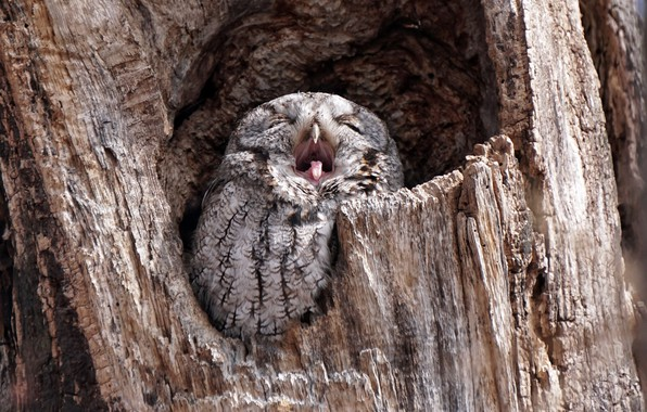 Picture tree, owl, bird, the hollow