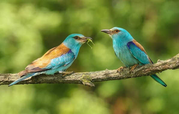 Picture birds, nature, branch, pair
