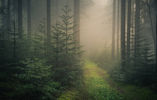 Picture road, forest, trees, fog, Germany, ate, Germany, Baden-Württemberg, Black Forest, The black forest, Baden-Wurttemberg