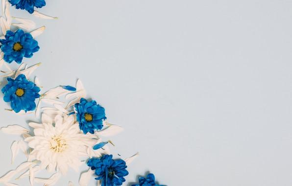 Picture flowers, petals, white, wood, blue, flowers, decor