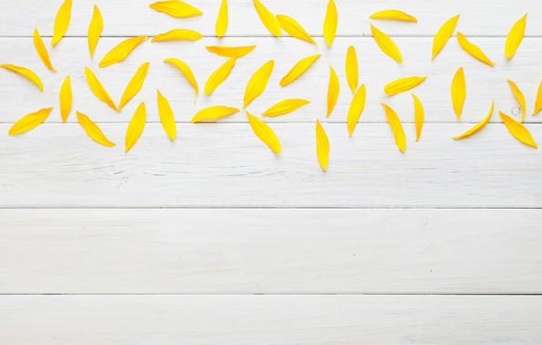 Picture texture, petals, white background