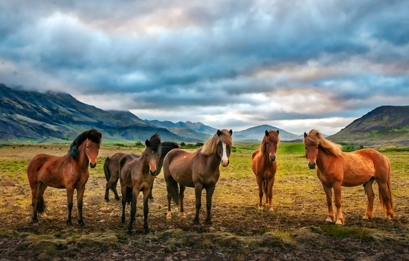Picture field, clouds, mountains, valley, horse