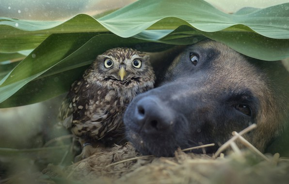 Picture face, leaves, owl, bird, dog, dog, bokeh