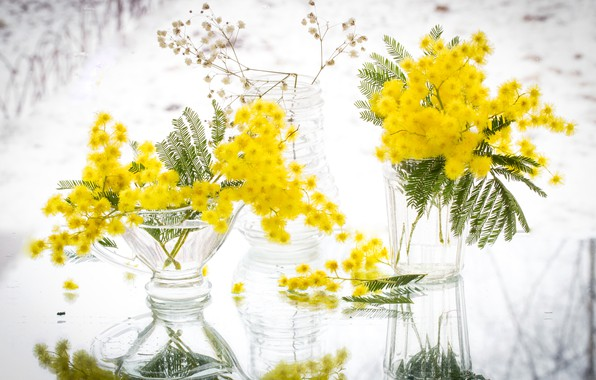 Picture yellow, reflection, Mimosa