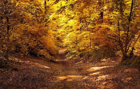 Picture autumn, forest, leaves, the sun, trees, yellow, path