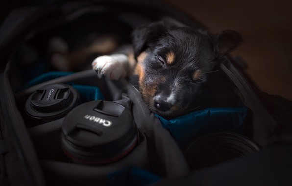 Picture dog, camera, puppy