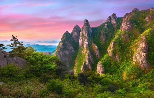 Picture the sky, flowers, mountains, fog, stones, rocks, valley, dervla